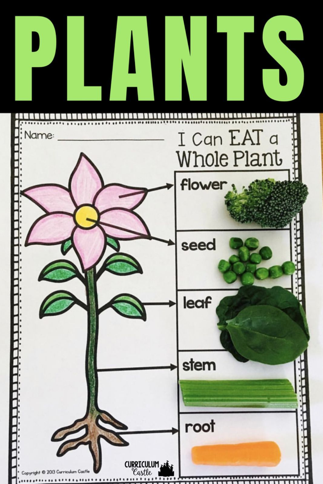 Parts Of A Plant Activity I Can Eat A Whole Plant