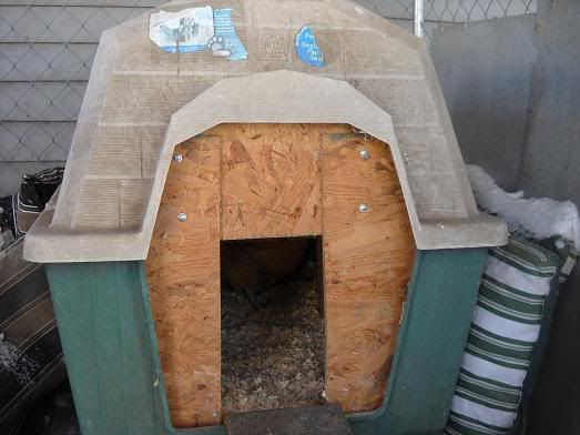 Convert A Dog House Into A Chicken Coop Igloo Dog House