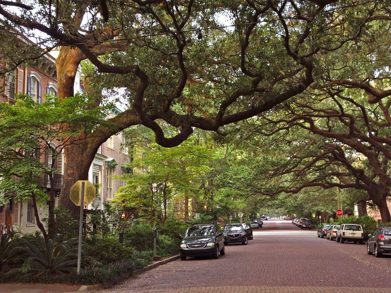Pin On Savannah