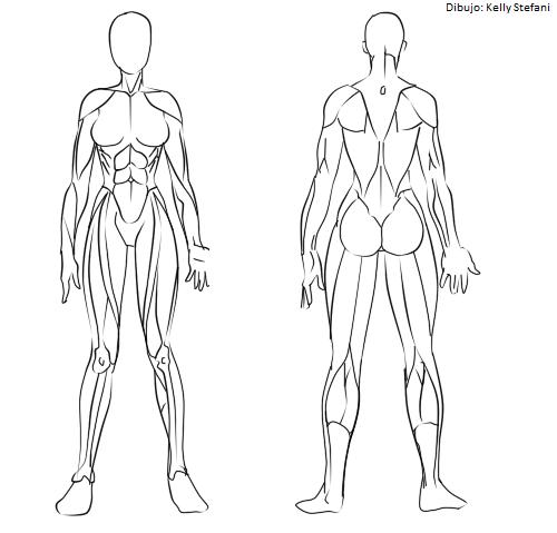 Musculo Femenino Cuerpo Humano Dibujo Dibujo Musculos Arte Del Bosquejo