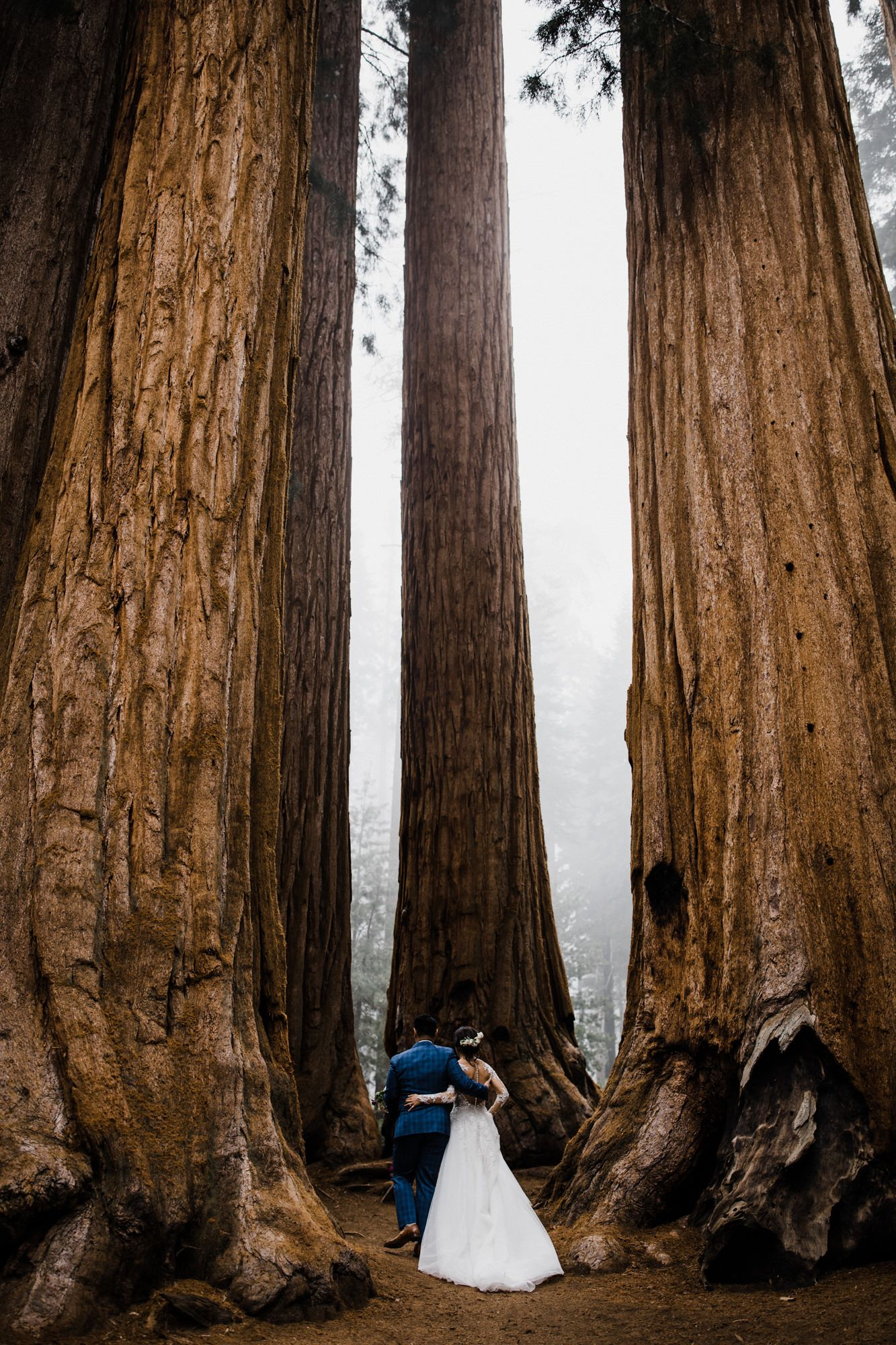 Sequoia National Park Foggy Intimate Wedding Day In A Giant Forest California Adventure Elopement Photographer The Hearnes Photography