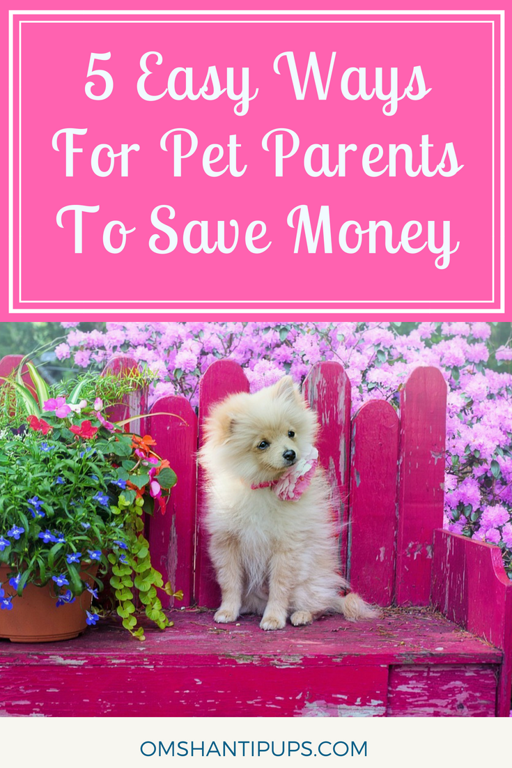 5 Easy Ways Pet Owners Can Save Money Pet Insurance For Dogs