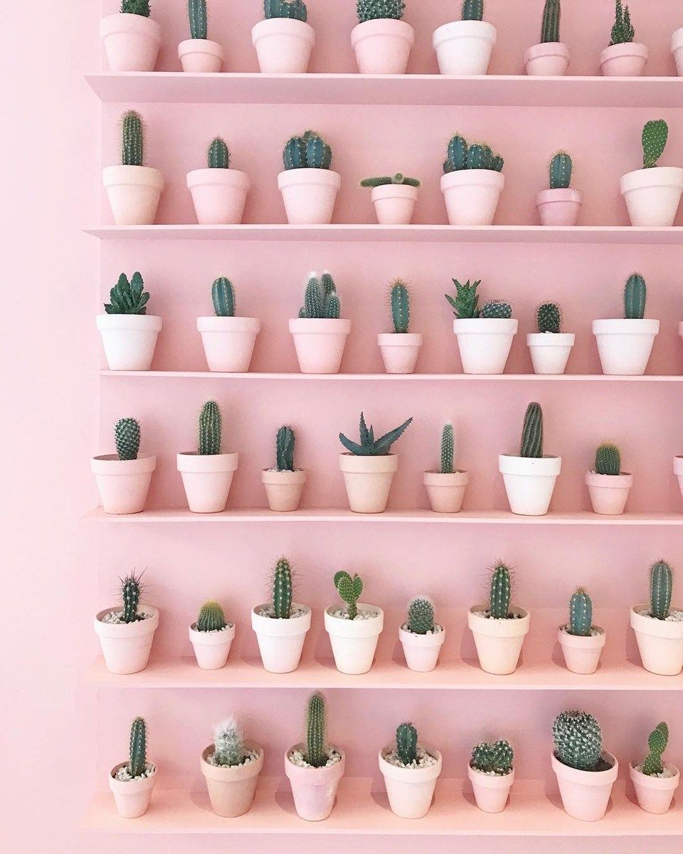 Cactus Porn Dibujo our plant goals for 2019! | pink plant, plant aesthetic
