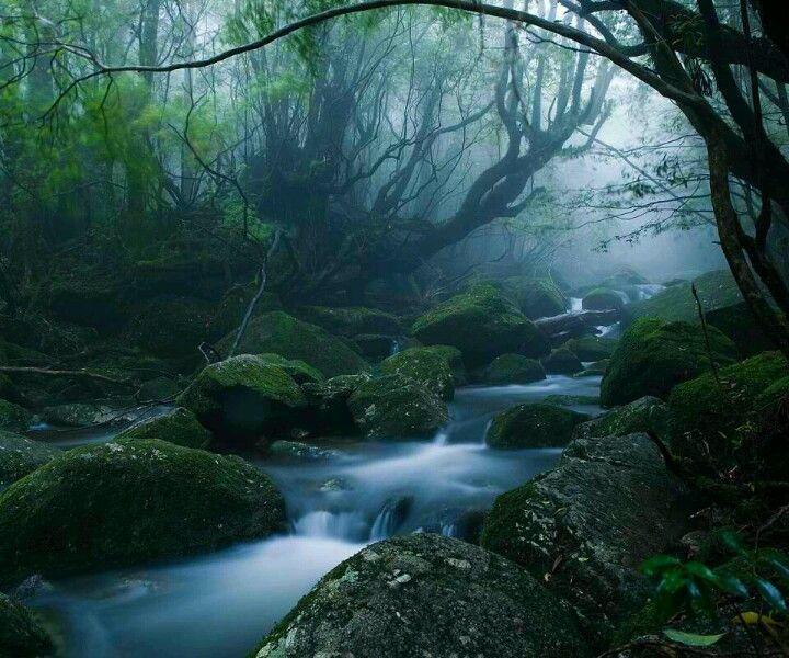 Yakushima, Nature, Japan Travel