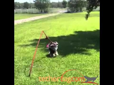 How Awesome Is This Herding Dogs Have So Much Energy And There