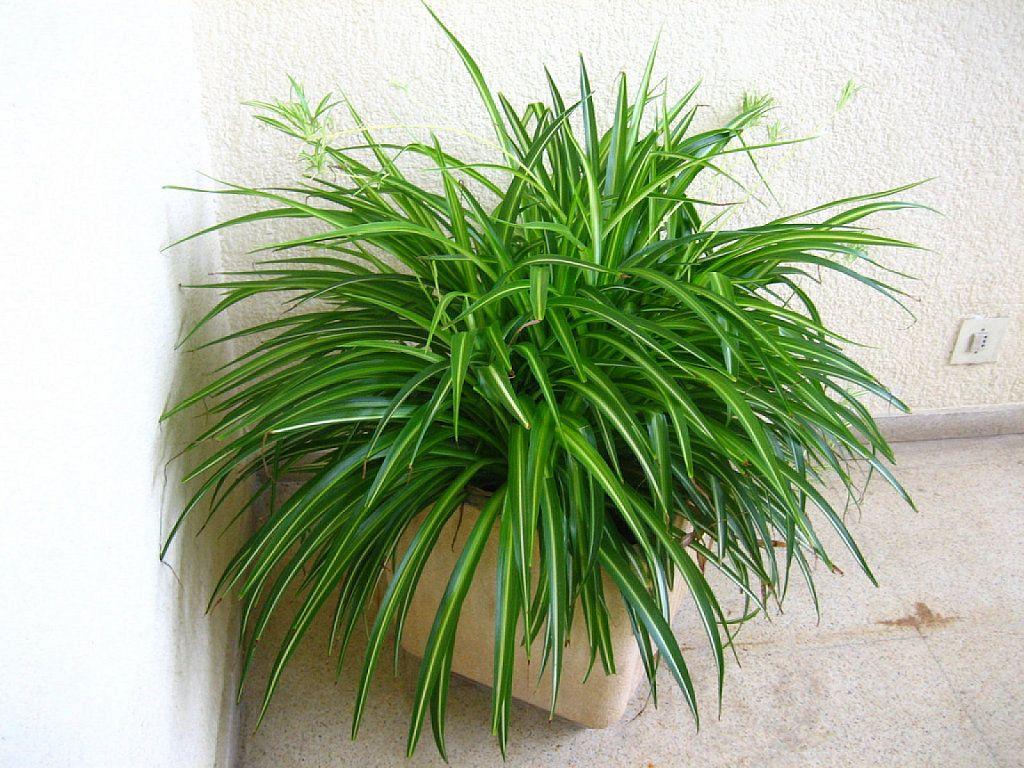 Cuidados imprescindibles de cualquier planta de interior for Plantas tropicales de interior