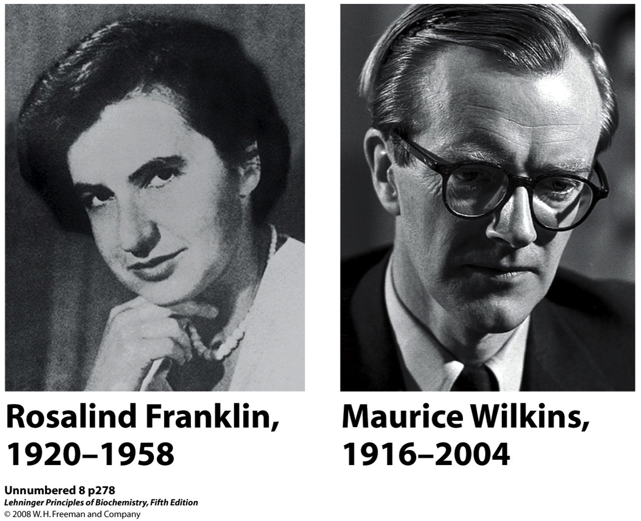 What is Maurice Wilkens famous for?