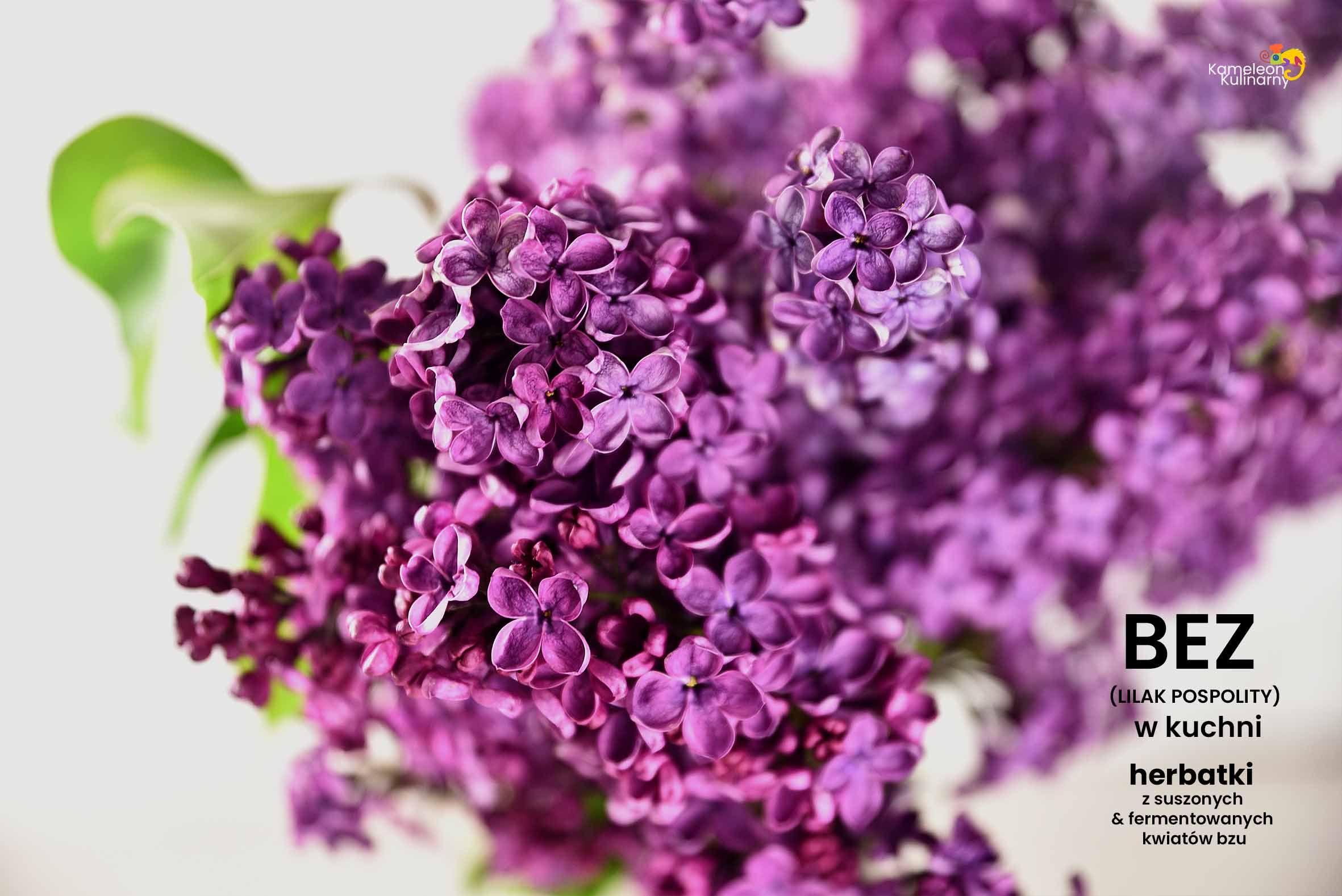 Bez W Kuchni I Herbatka Z Suszonych I Fermentowanych Kwiatow Bzu Vegetables Red Peppercorn Cabbage