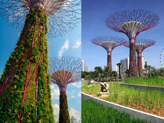 The World S Most Ambitious Flower Trellis Is In Singapore A Trilogy Of Parks Called Gardens By The Ba Gardens By The Bay Water From Air Rain Water Collection