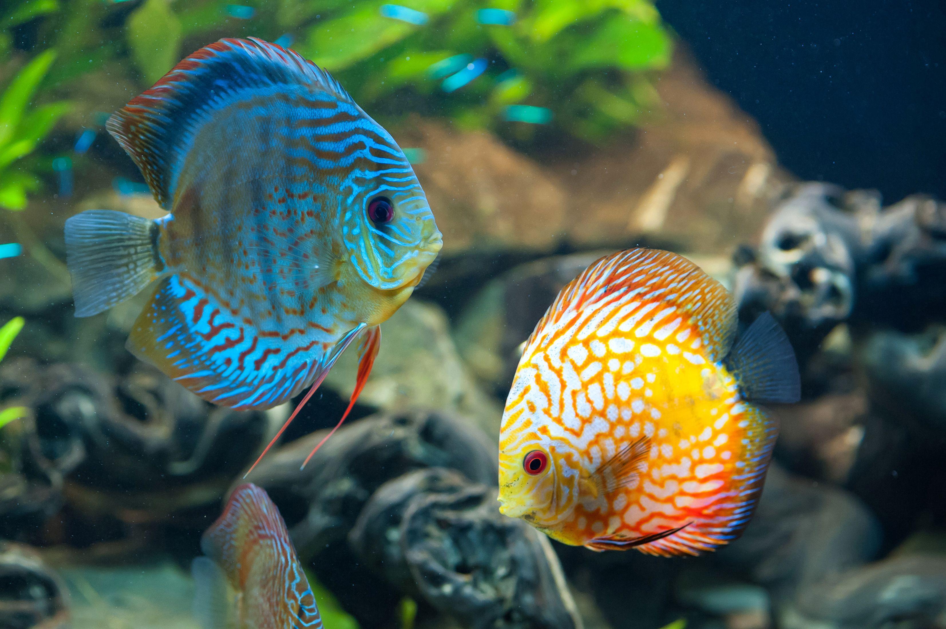 140d17b511e0ba59894b660b47b4a508 Frais De Aquarium Tropical Schème