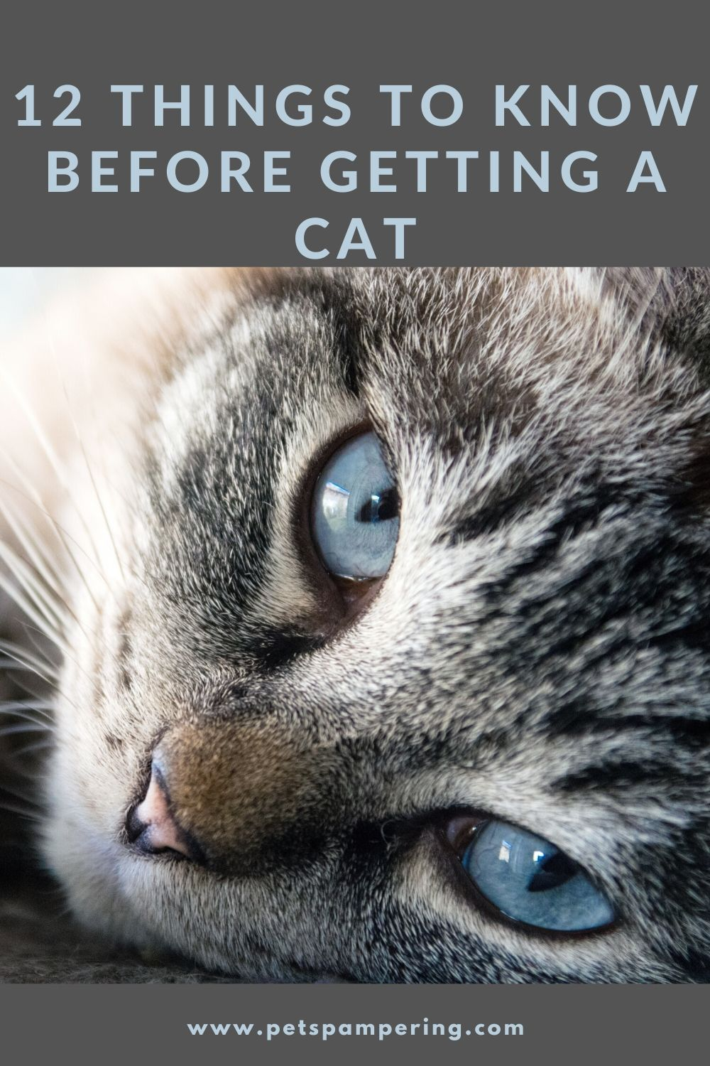 12 Things to Know Before Getting A Cat. Essentials Of Cats  How To Keeping Your Cats Happy Indoors?  Cats are really beautiful animals. They make great and fun-loving pets. But there are some points you must know before bringing a new cat home. And especially when you are a complete beginner and never had a cat before you must read this article. #cats #catsofinstagram #cat #of #catstagram #instagram #catlover #catlovers #instacat #meow #catlife #pets #kittens #kitten #kitty #catoftheday #cute