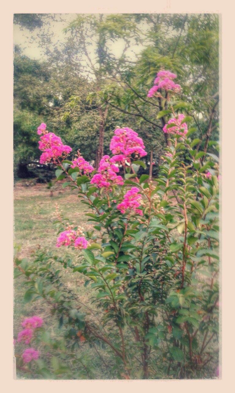 #Flores #Bellezanatural #RepublcaDominicana