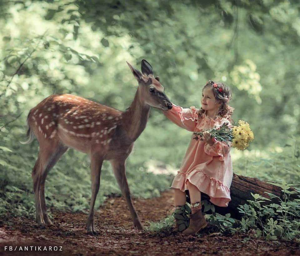 غزال رنا مها Animals Beautiful Fantasy Photography Animals For Kids