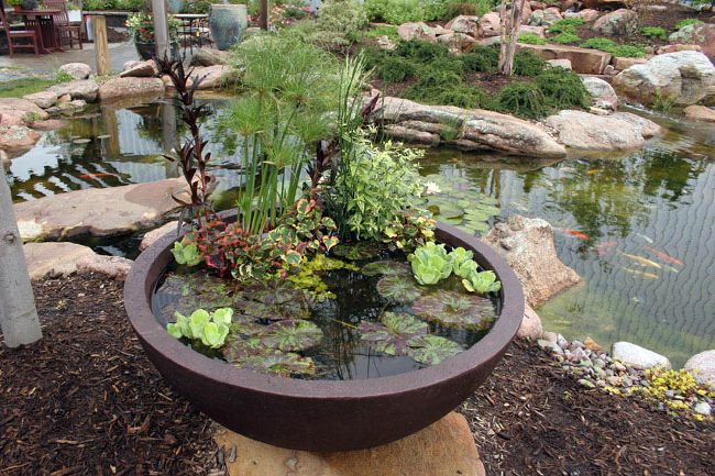 Container Water Gardens :: Hometalk