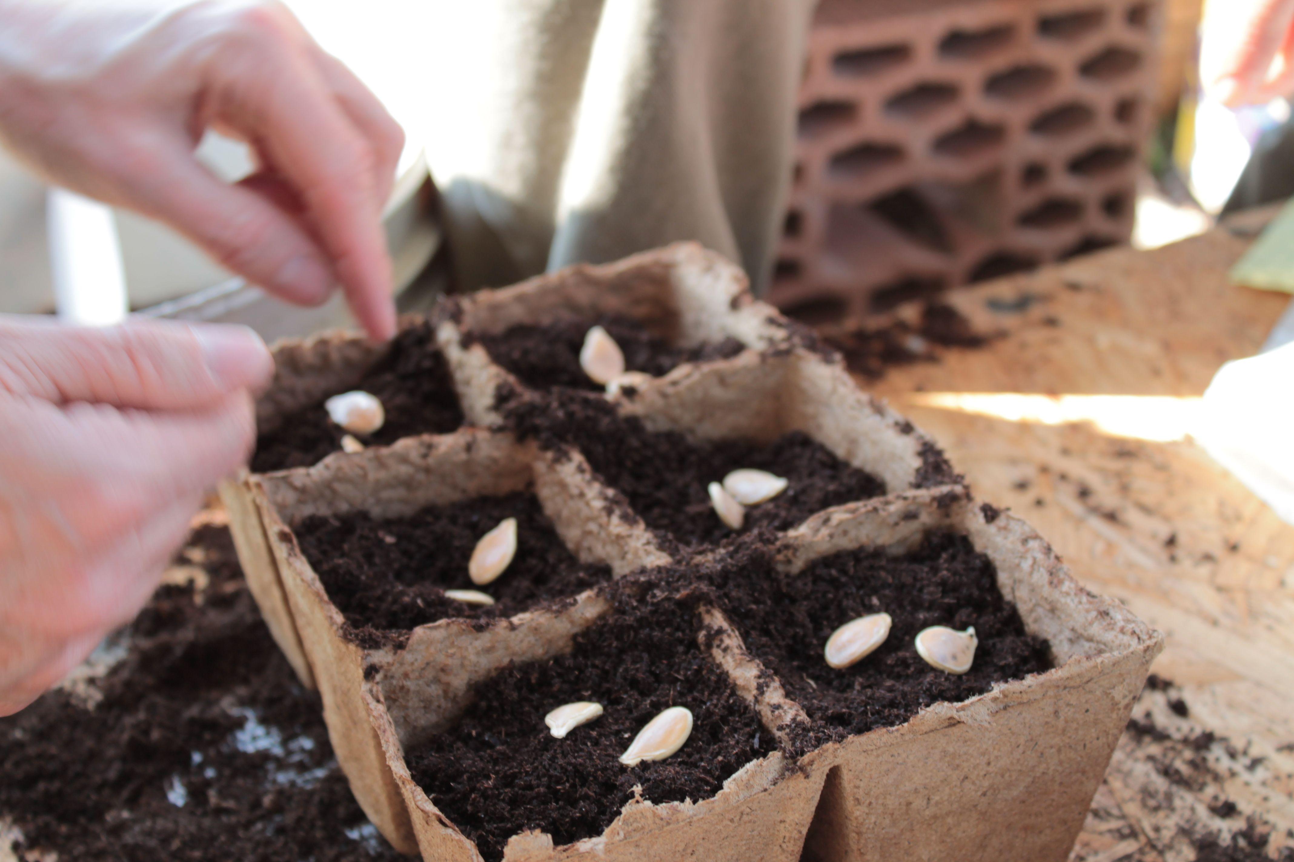 Chi getta un seme l'ha da coltivare se vuol vederlo a tempo vegetare! #proverbi #orto #giardino