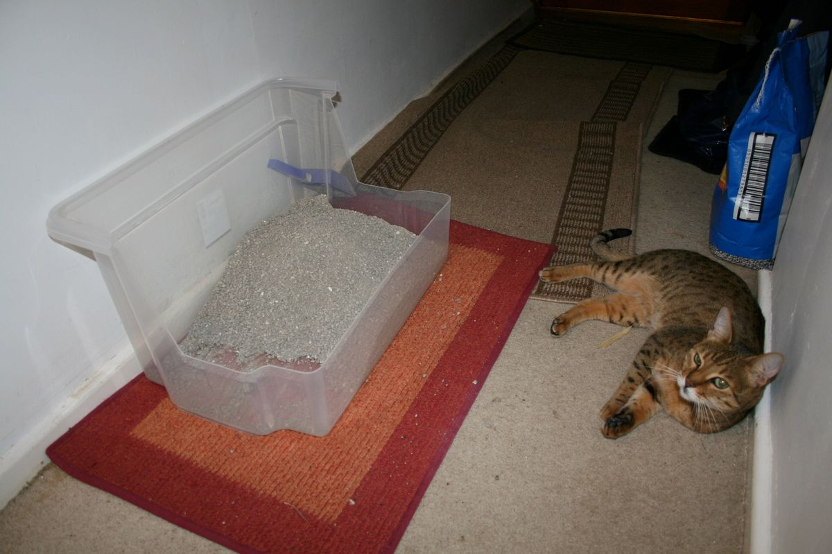 Diy High Sided Cat Litter Box So Doing This With Images