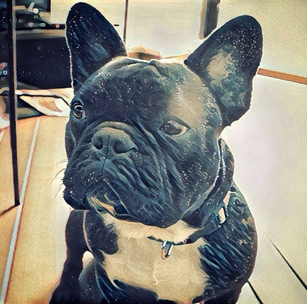 Este Soy Yo Zizou Un Bulldog Frances Grande Frenchbulldog Frenchie Dog Bulldog Bulldog Animals French Bulldog