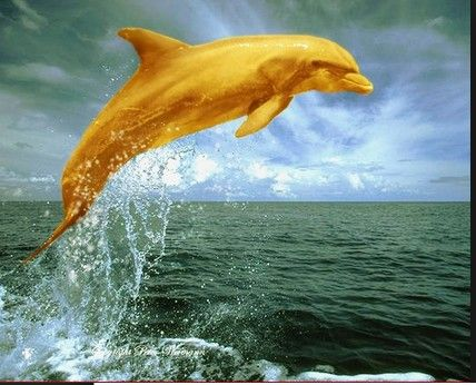 Golden Dolphin Dolphins Rare Albino Animals Water Animals