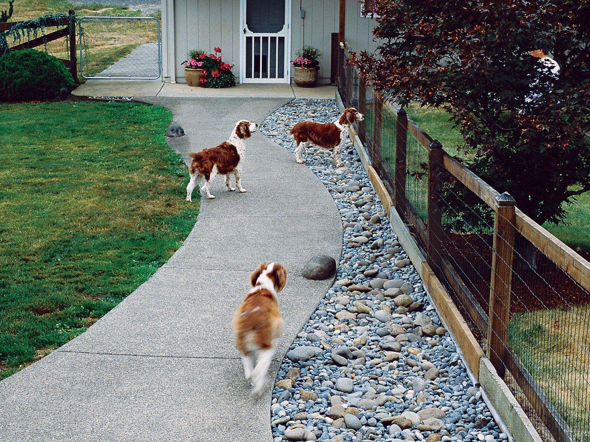 Q&A: More Help for Dog-Friendly Gardens  Dog friendly backyard