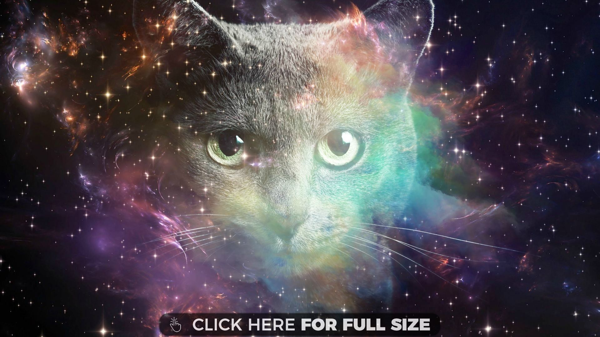 Space Cat H Space Cat Cats Galaxy Space