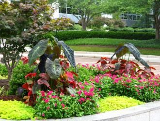 Commercial Landscape Design Maintenance Landscapeservices