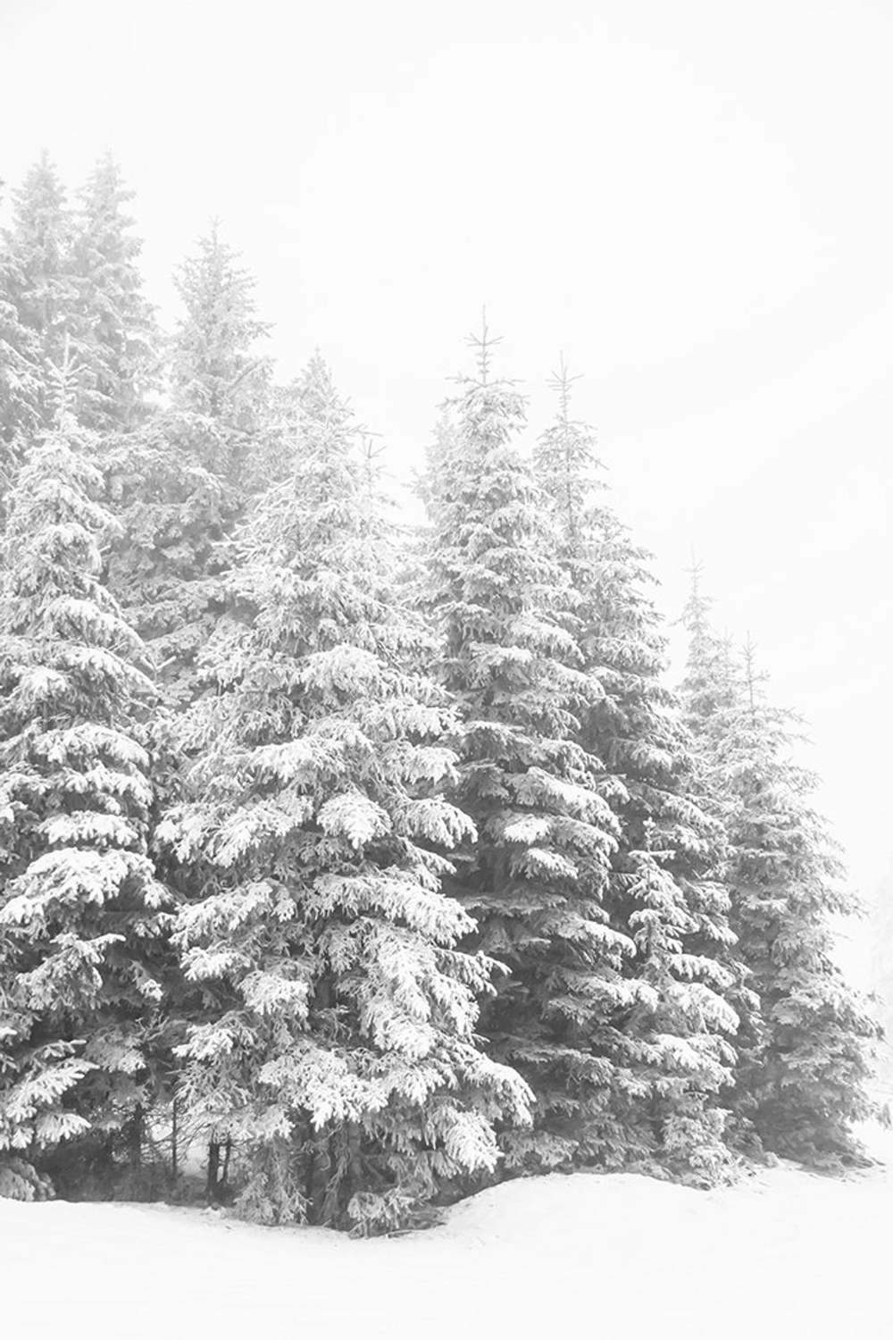 Winter Print Snowy Forest Art Winter Forest Living Room Art Christmas Prints Winter Landscape Snow Covered Trees Black And White Wall Art