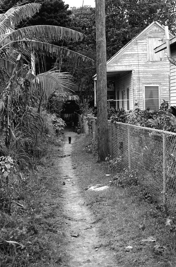 Key West, Passover Lane off Angela St., 1973. Love these