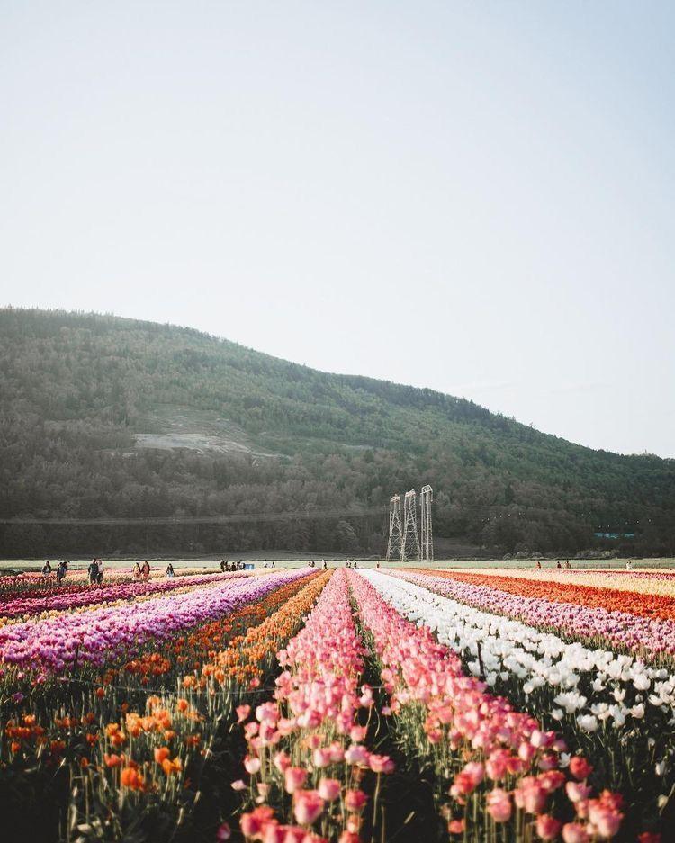 Flower Field Landscape Photography Flower Aesthetic Wild Flowers