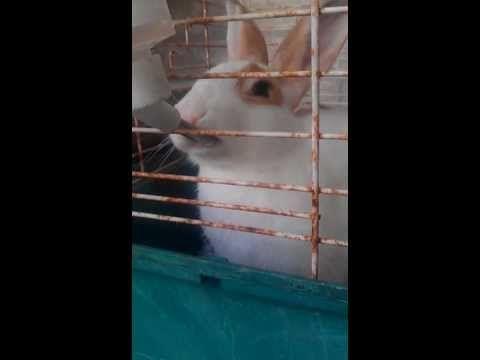 The drinking rabbit
