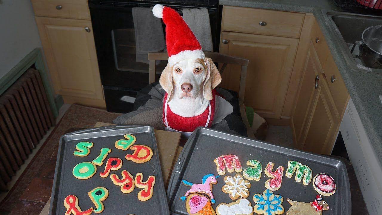 Dog Makes Christmas Cookies Funny Dog Maymo Christmas Cookies Easy Funny Dogs Funny Dog Videos