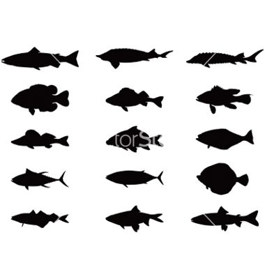 Silhouette Of Sea And River Fish Vector Fish Silhouette Fish Vector Book Page Art