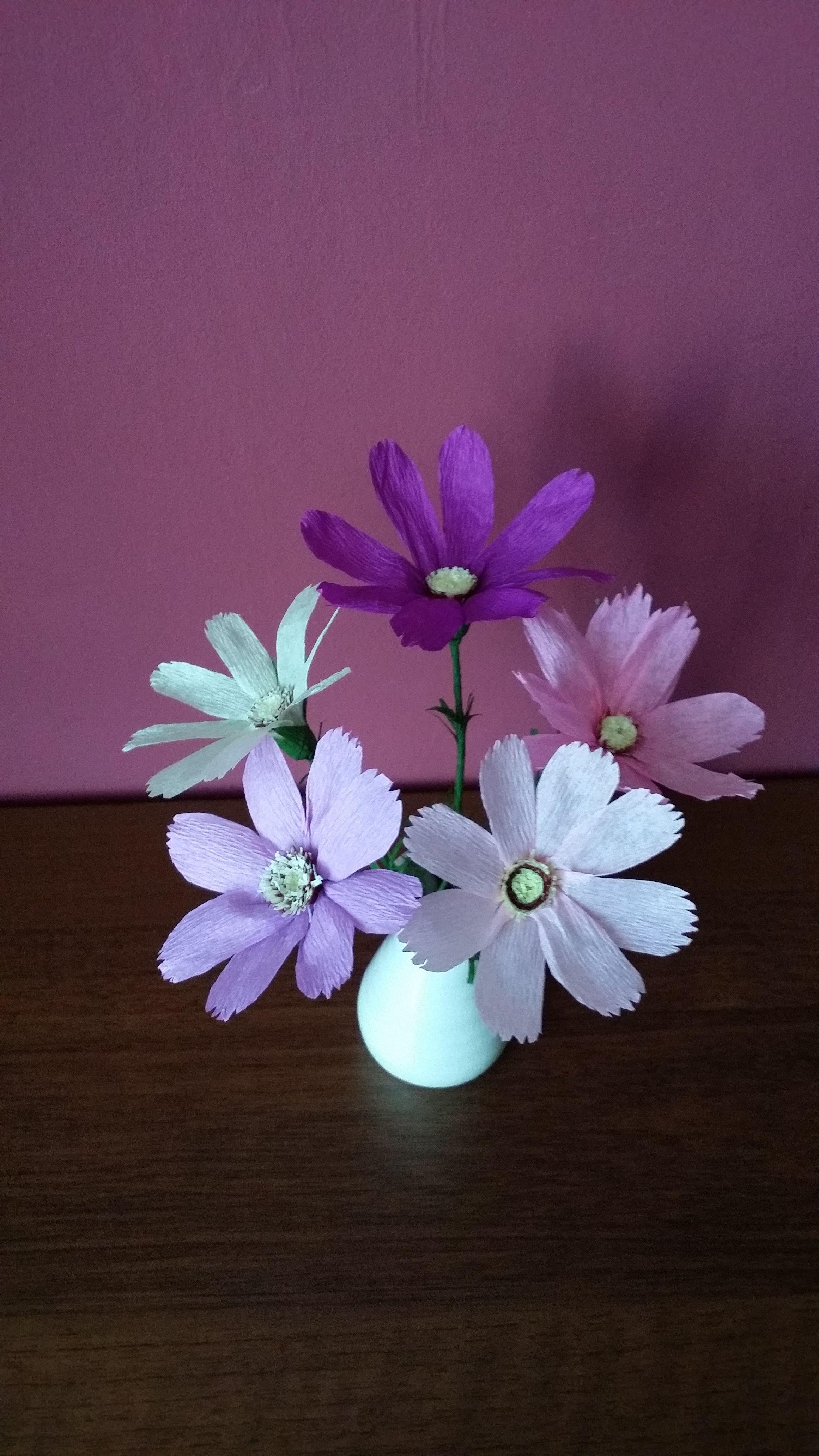 Kwiaty Z Krepiny Kosmos Plants