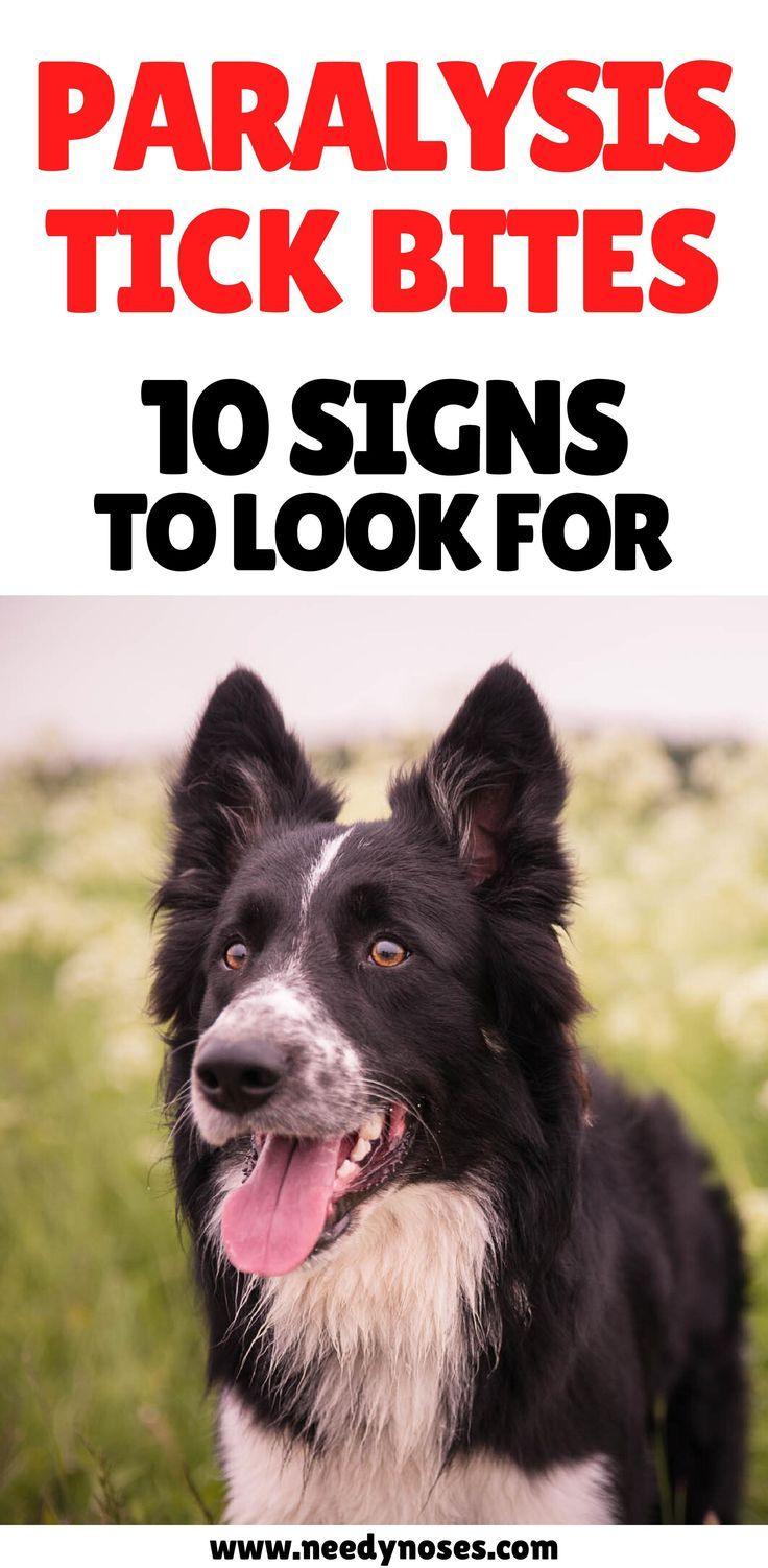 Pin on Pet Safety