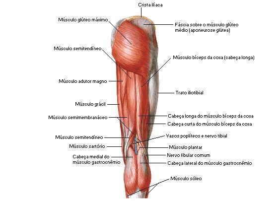 Quadril - Membro Inferior - Sistema Muscular - Sistemas - Aula de ...