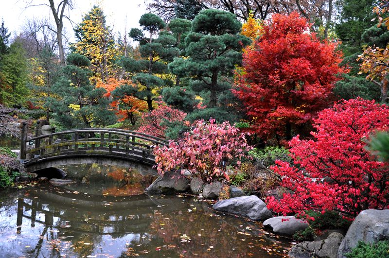 Best Time To Visit Anderson Japanese Gardens