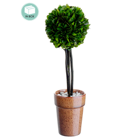 "12"" Preserved Boxwood Ball-Shaped Topiary Plant w/Terra Cotta Pot (pack of 6) - APS073-GR"