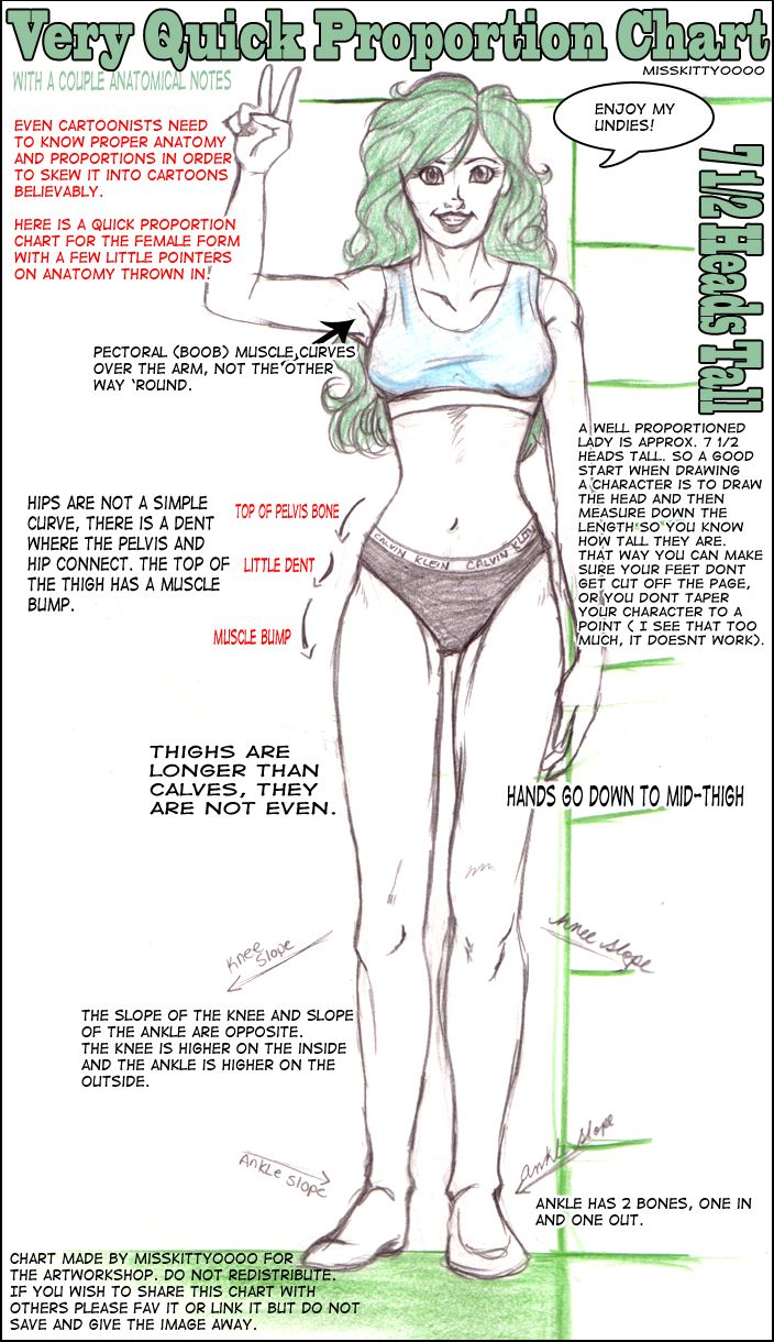 Basic tips for drawing womanly forms even i miss these sometimes and im definitely a woman