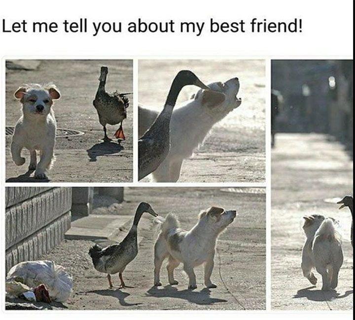 Funnymemes4u Com Funny Animal Memes Funny Animals Animal Memes