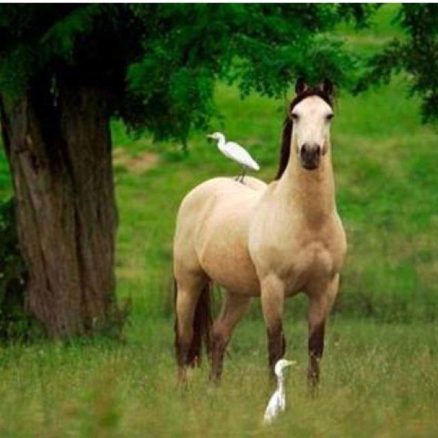 The Bird The Buckskin Horse Love Stallion Horses Pretty Horses