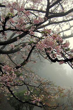 Oh Suze Q Amabitious Aesthetics Blossom Trees Nature Beautiful Nature