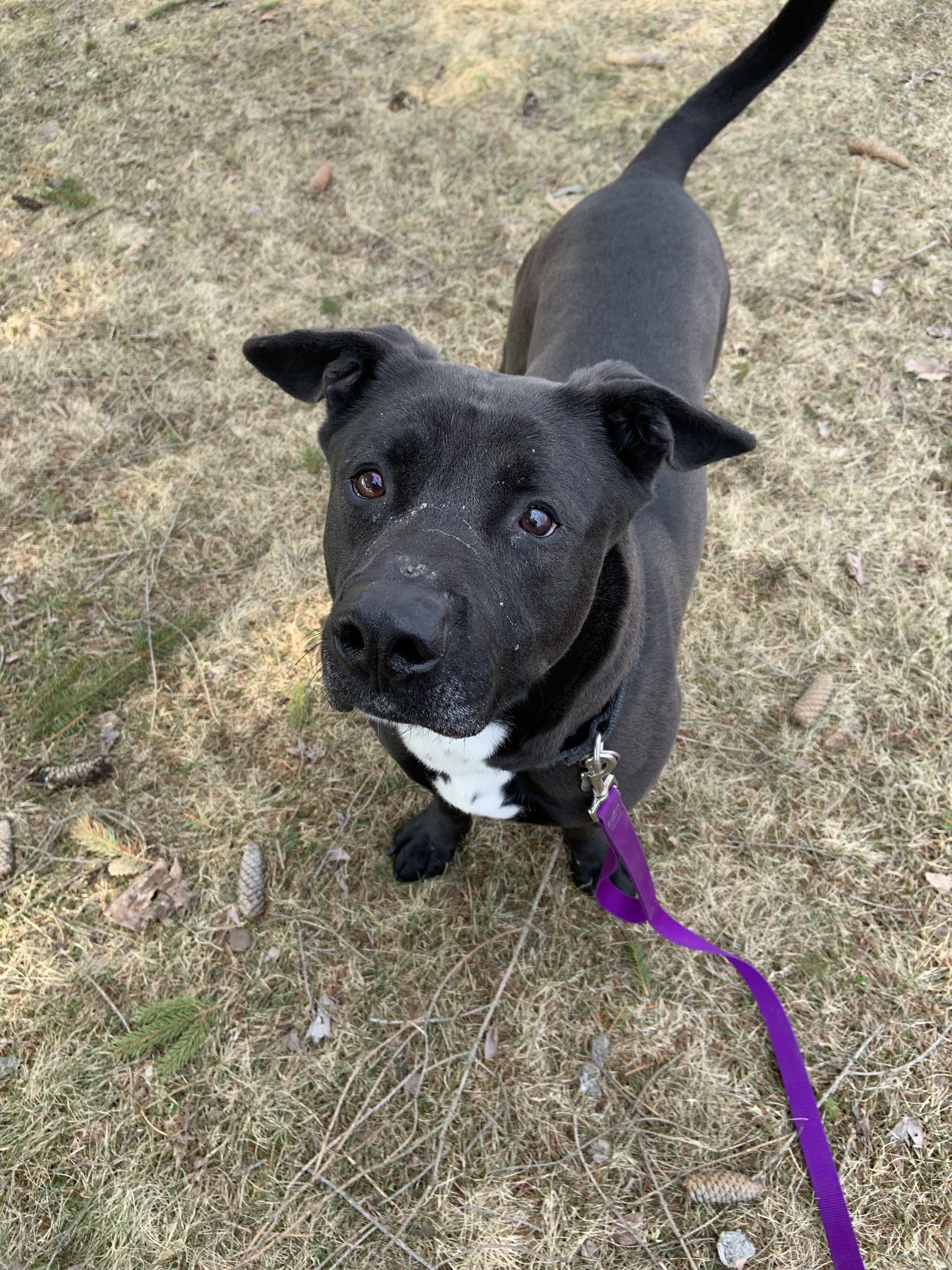 Adopt Twitch Canine Campus Training On Black Dog Syndrome