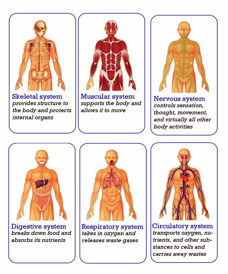 Learn about all 6 human body systems with this link! | Human Body ...