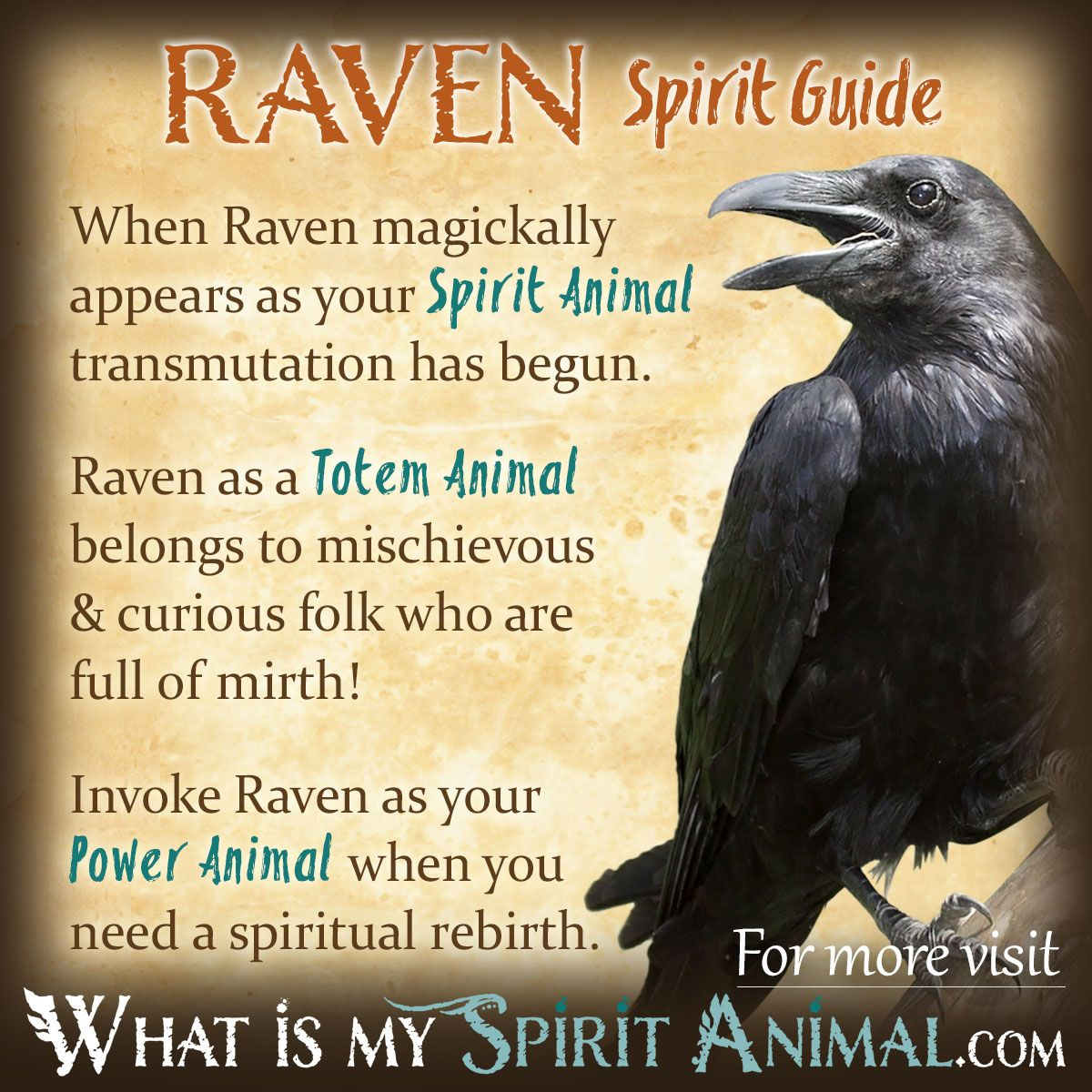 Raven Symbolism Meaning Animal Totem Spirit Guides Spirit