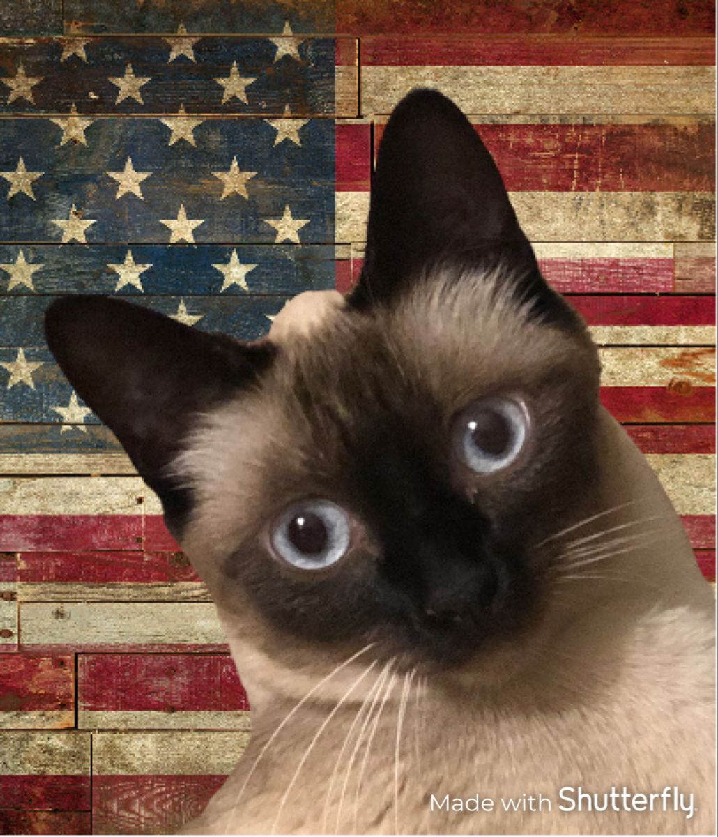 Siamese Cats For Sale New Mexico