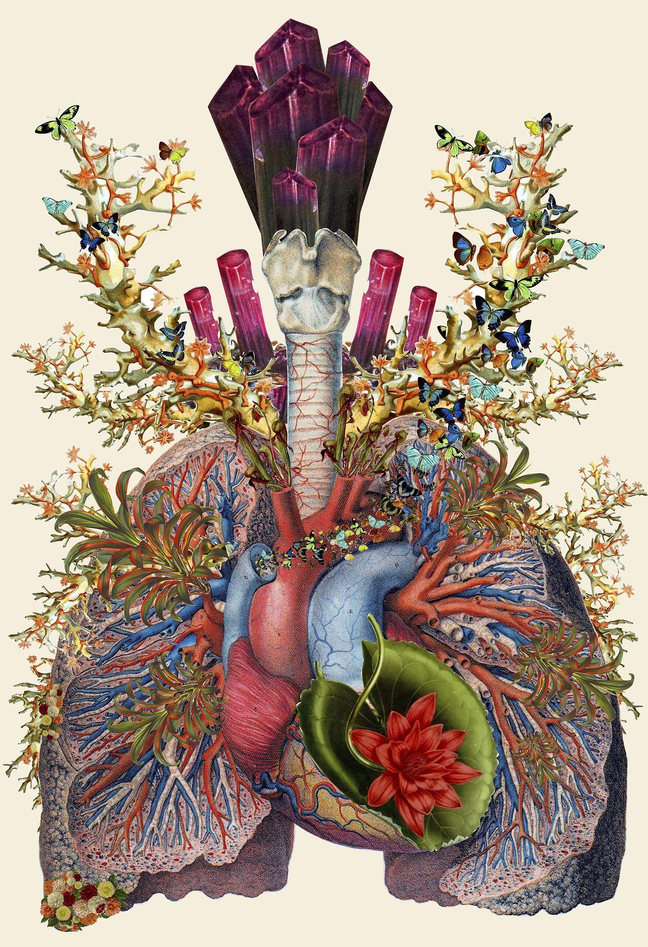 Collages anatómicos por Travis Bedel   Libro de texto, Collages y ...