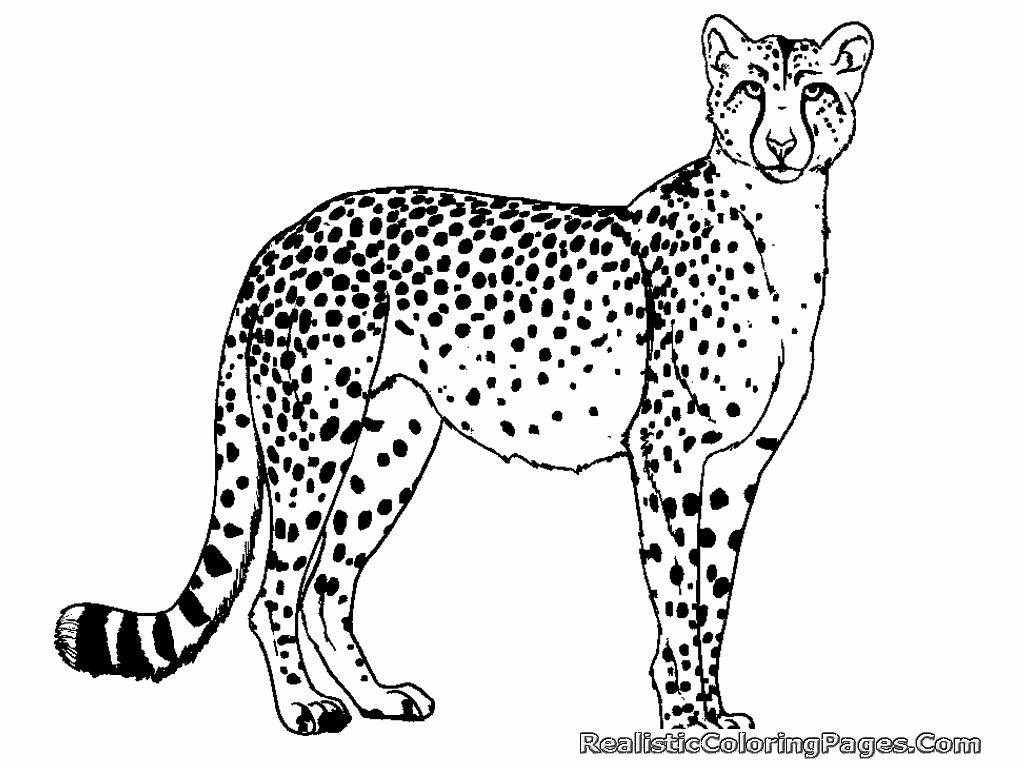 Cheetah Coloring Pages Inspirational Free Coloring Pages Cheetah Cheetah Pictures Cheetah Drawing Easy Animal Drawings