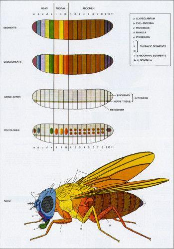 SCIENTIFIC AMERICAN 1979 PDF