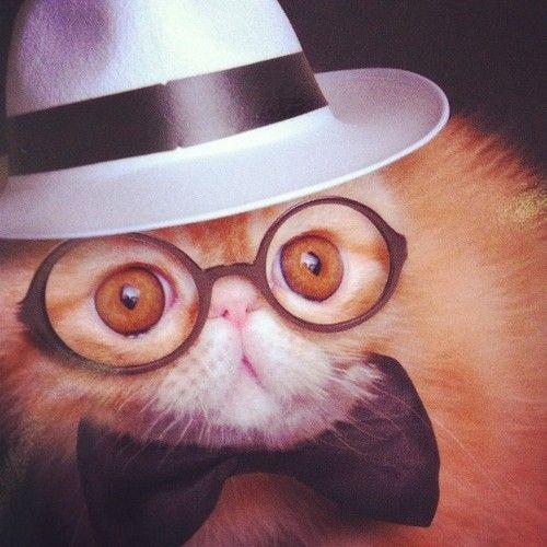 Truman Capote Kitty