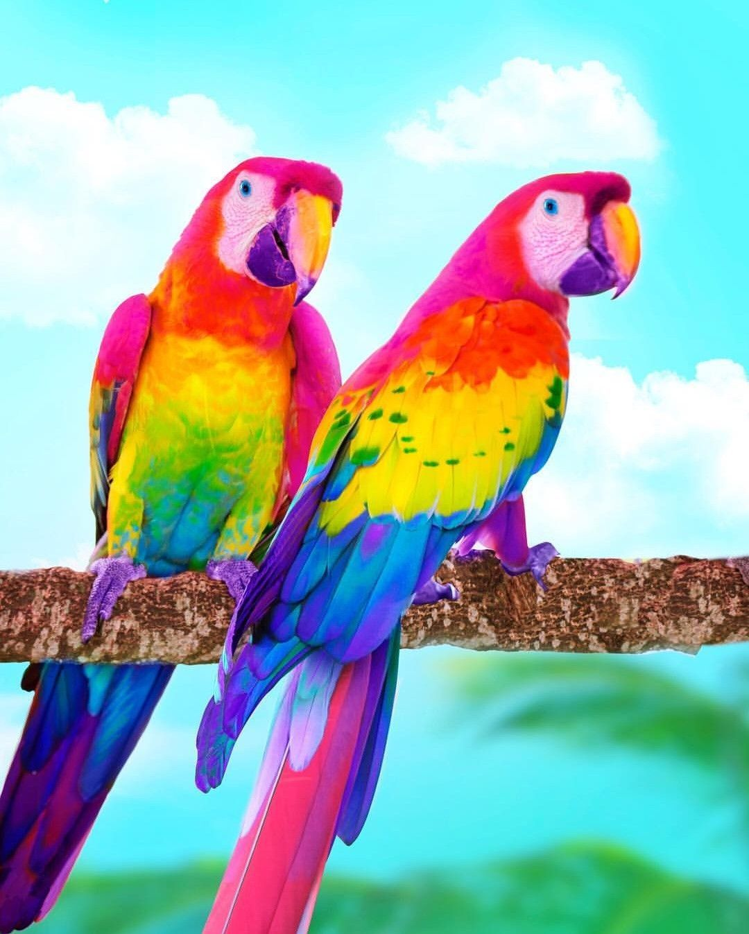 Pin By Nam Hughes On Rainbow Colorful Animals Cute Baby Animals