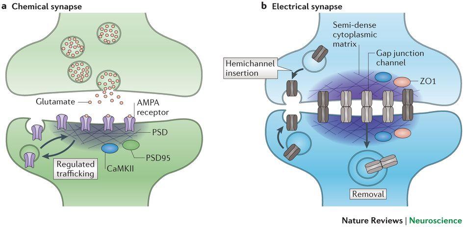 receptors in the body pdf